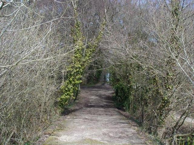 Track to Llyn Helyg