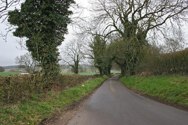 Road from Dummer towards Dummer Down Farm