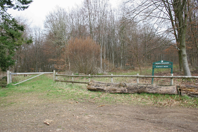 Rownest Wood