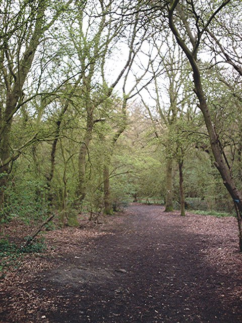 Beckney Wood - Footpath near  S.W. Corner