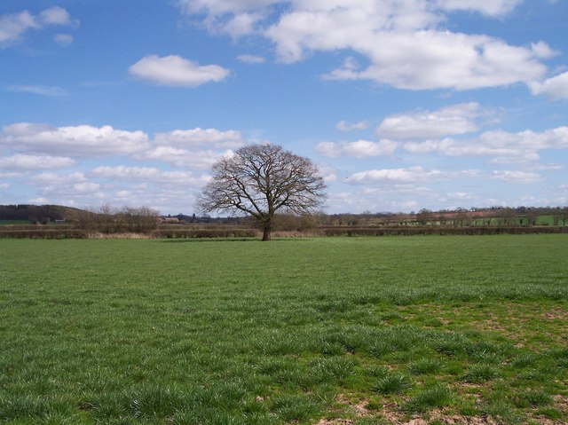 Grassland and Oak, Felton