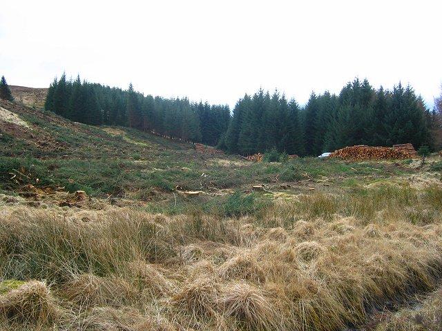 Tree harvesting, Acurrach