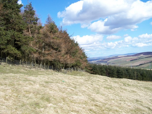 Looking east along the edge of the forestry plantation.