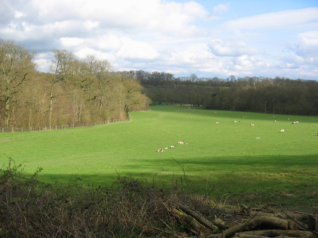 Tanhouse Wood and Fields - Toys Hill