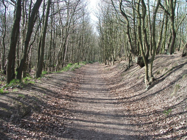 Footpath in Haw Park Woods