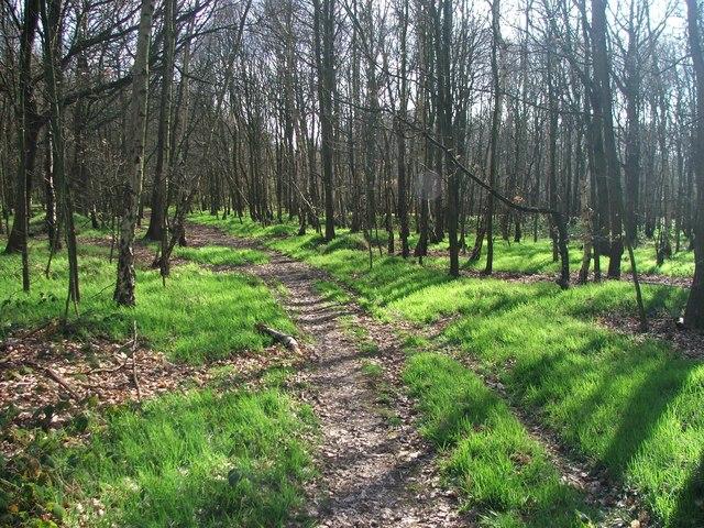 Haw Park Woods.
