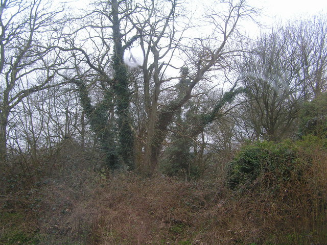 Woods behind Stonegate station