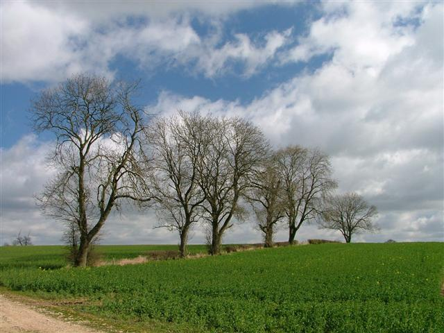 Fields Off Pickeringmoor Lane, Maunby Demense