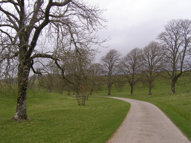 Tree-lined lane in the valley north of Hampton Plantations