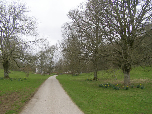 Tree-lined lane approaching Pigeon House