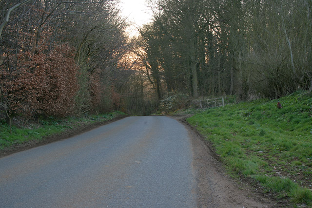 Fanny's Wood near Woolsthorpe