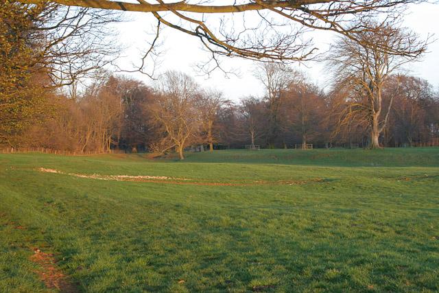 Parkland on the Belvoir Estate