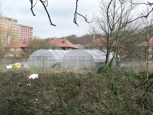 Plastic tunnels on allotments, Headingley