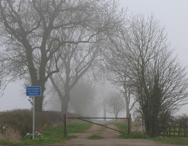 Gartree Lane in the Spring mist