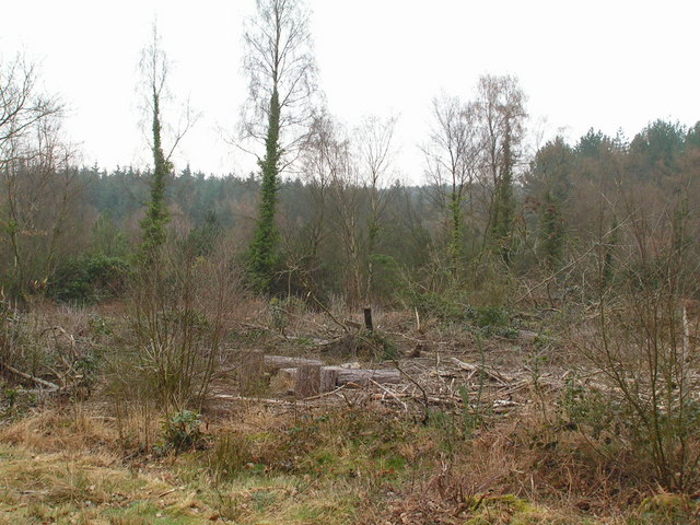 Clearing in the Great Wood