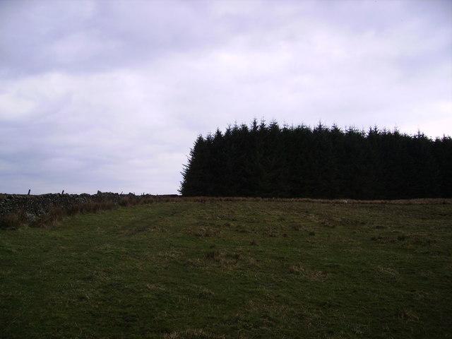 Higher Thrushgill Plantation