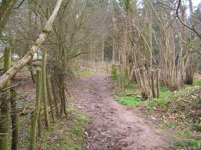 Entering the Great Wood near Battle