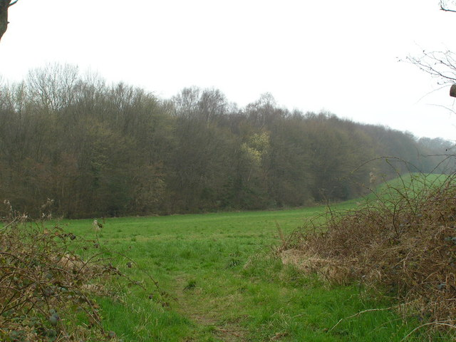 The Northern edge of Petley Woods
