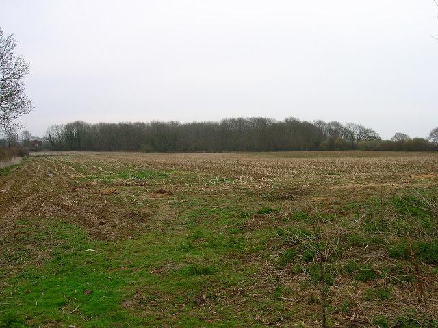 Decoy Wood