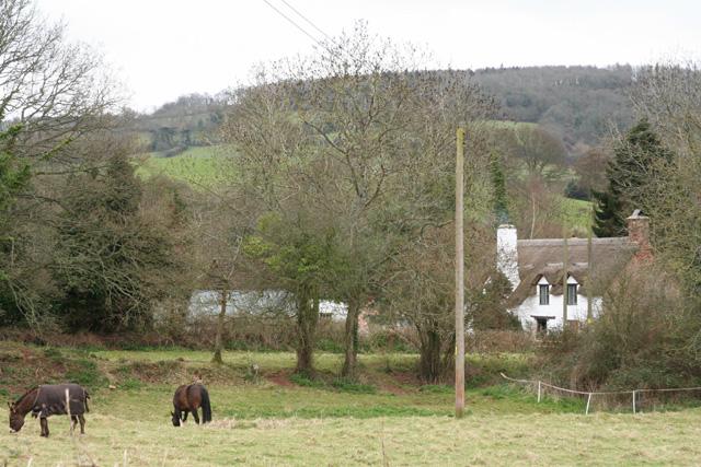 Monksilver: Cottage at Woodford