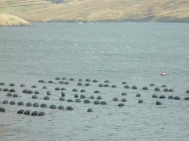 Mussel Rafts, Olna Firth, Shetland
