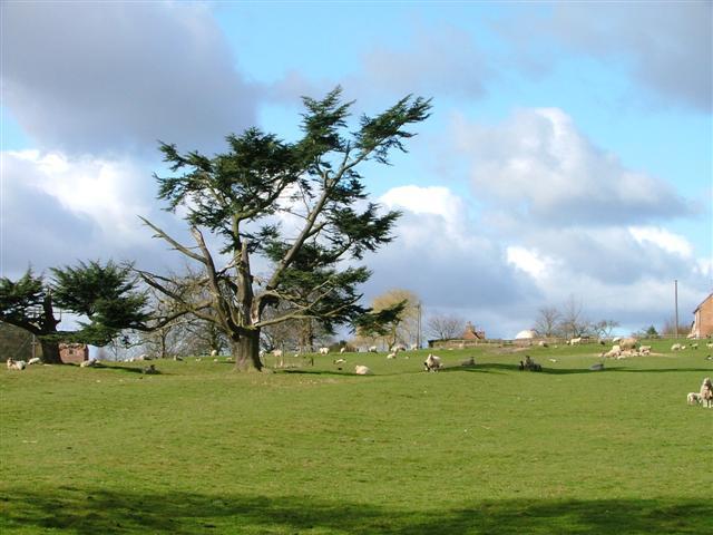 Sheep Pasture, Sowber Hill Farm