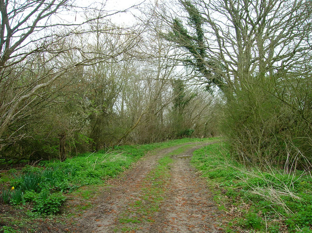Farm Track, Willow Shaw