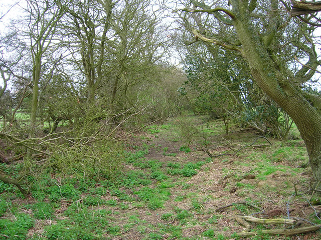 Old Field Boundaries near Mark Cross