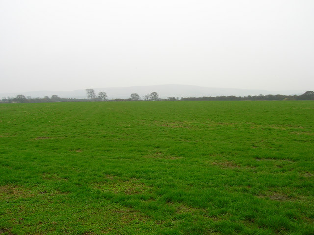 Field south of Langtry Lane