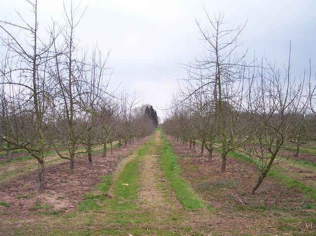 Young Orchard, Burmarsh