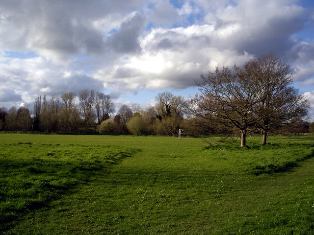 Middle Street Meadow, West Harnham