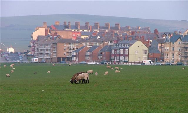 Sheep Pasture, Windy Hill Farm