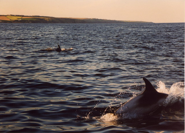 Dolphins south east of Old Portlethen