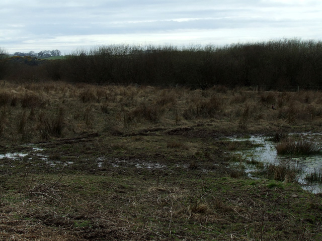 Wet marshland