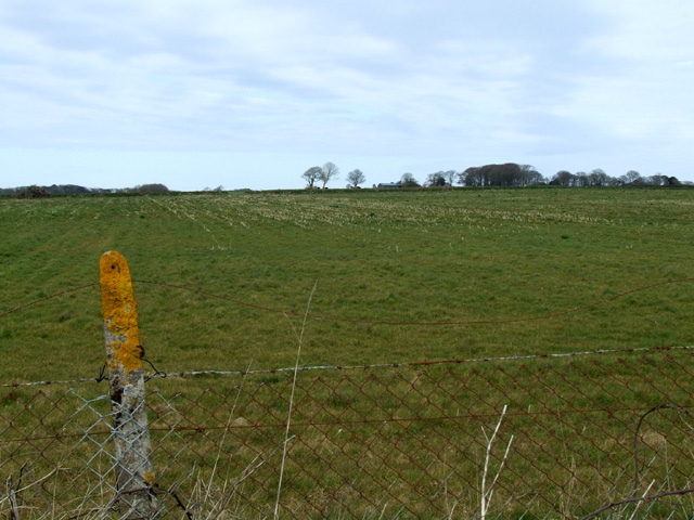 Field alongside road