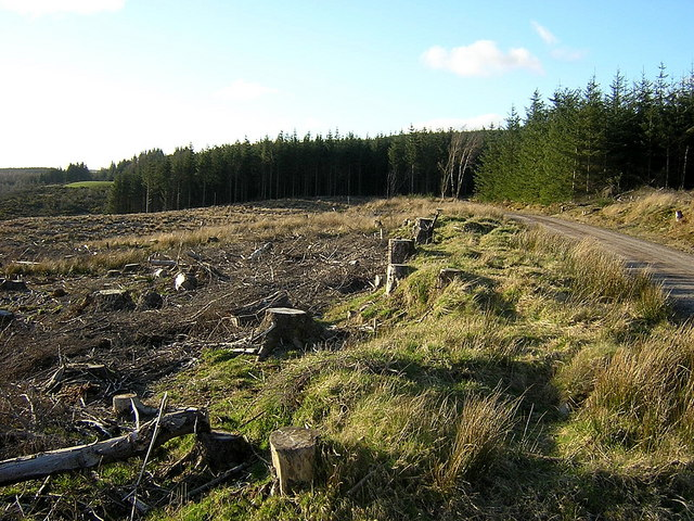 Forest Felling Near Drymen