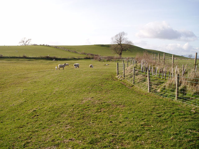 Pasture near Overthwaite farm