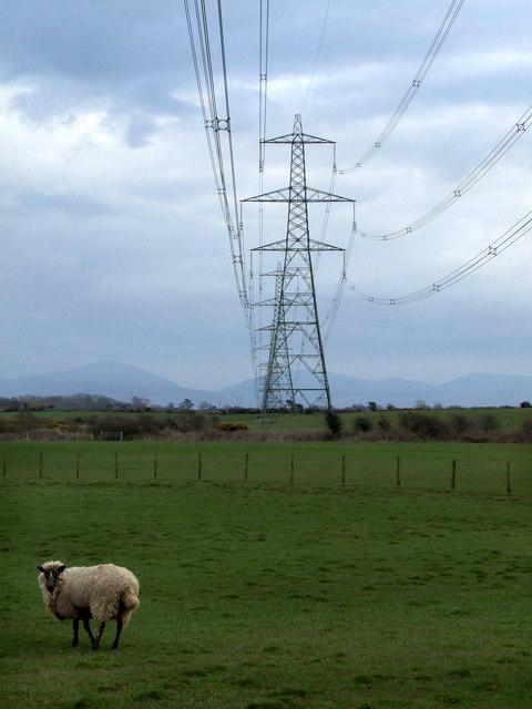 Pylons at Maen Eryr