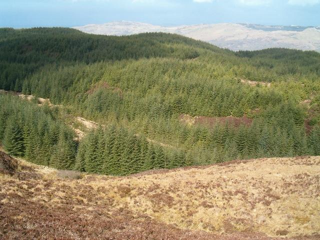Forest above Kames
