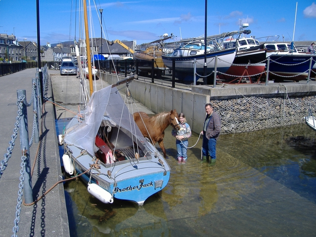Pony in  Castletown harbour