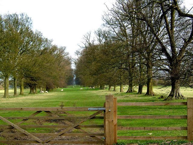 Lime Tree Avenue, Boughton Park