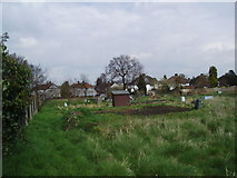 TQ4572 : Allotment gardens, off Longlands Road, Sidcup,Kent by Dr Neil Clifton