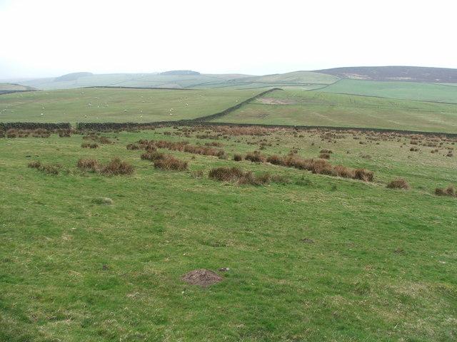 Grazing Land near Counter Hill.