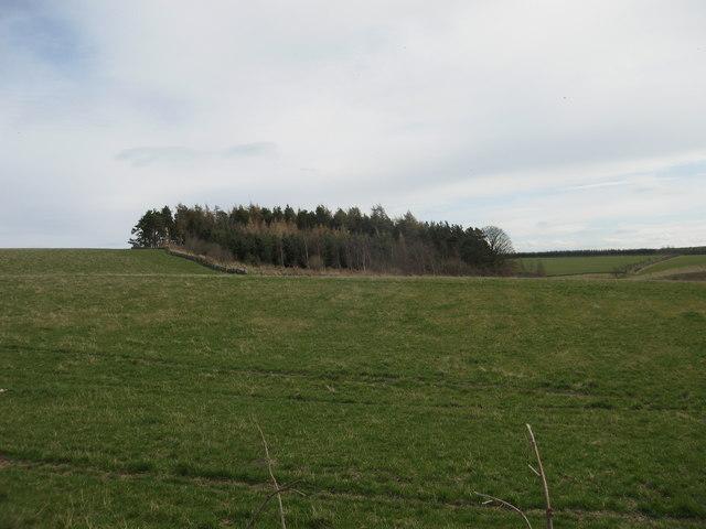 Roundel Wood, Lammermuirs