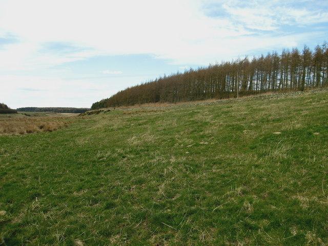 Landsend Wood, Lammermuirs