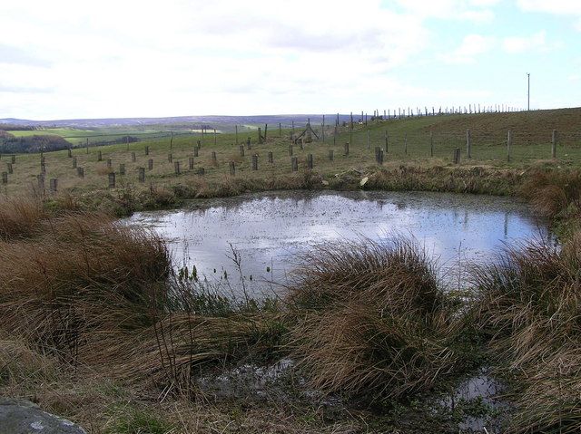 Pond : Cordilleras Lane