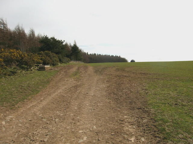 Hill Wood, Lammermuirs