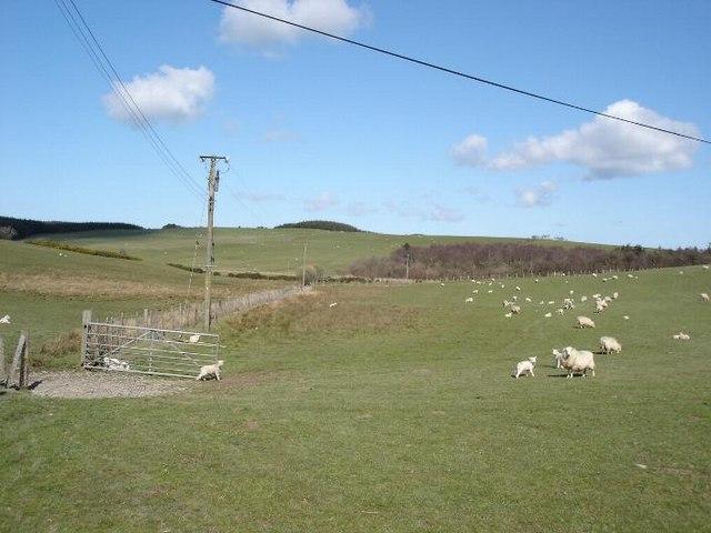 Grazing east of Llanrwst