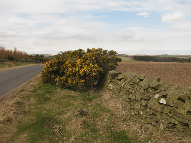 Lammermuir Road