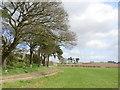 SJ5468 : Watling Street near Old Pale, Cheshire by Sue Adair